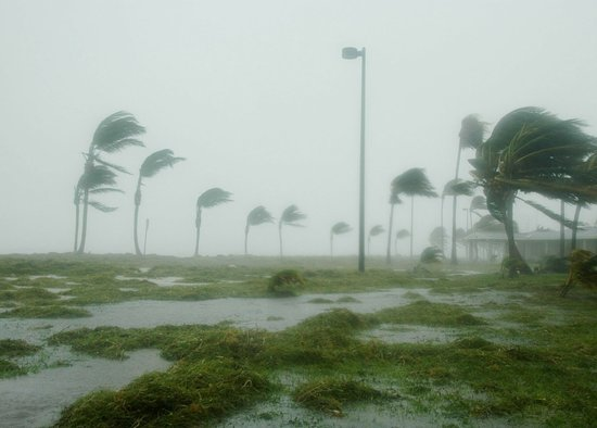Hurricane force winds, palm trees