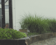plants on pavers in the rain